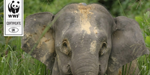 We've sponsored an Elephant!